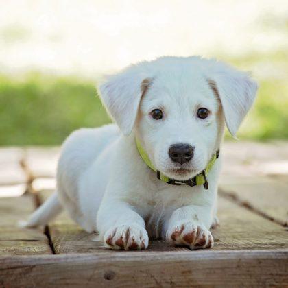 puppy-1903313_1280