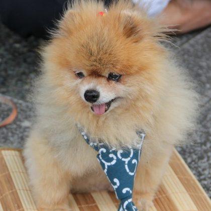 dog-1644699_1280